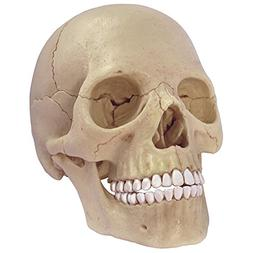 4D Master 26086 Human Anatomy Exploded Skull Model 3D Puzzle